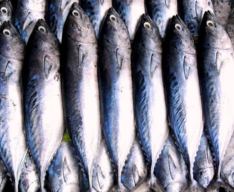 sarahvassallo-fish